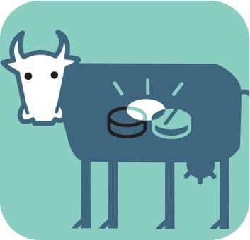 Antibiotics and cows